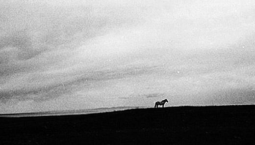 L'origine dei nove cavalli bianchi