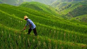La modernizzazione dell'agricoltura
